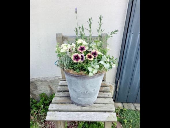 花と緑のある暮らし♪寄せ植えWork Shopを開催します!